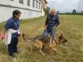 addestramento-pastore-tedesco (FILEminimizer)