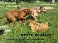 Puppy class-29 giugno (FILEminimizer)