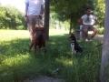 cuccioli-educazione-lezione (FILEminimizer)
