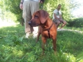 cucciolo-educazione (FILEminimizer)