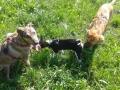 educazione-del-cucciolo-di-cane (FILEminimizer)