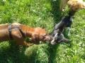 puppy-training-cuccioli (FILEminimizer)