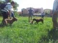 socializzazione-cani (FILEminimizer)