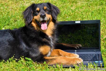 contatti-educazione-del-cane