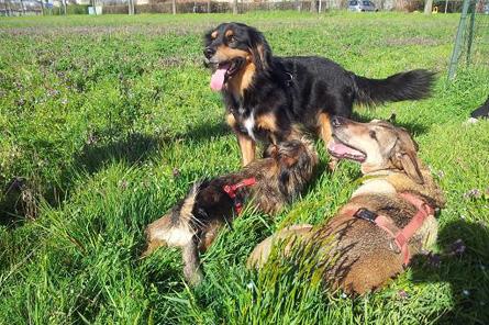 lezioni-di-gruppo-per-cani