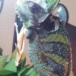 Filippo, il nostro amico camaleonte!