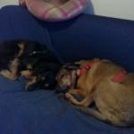 Lillo e Leonida, i cani tutor di Una Vita a 6 Zampe!