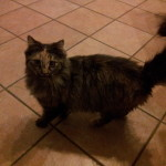 Peluscia, la gatta più coccolona!