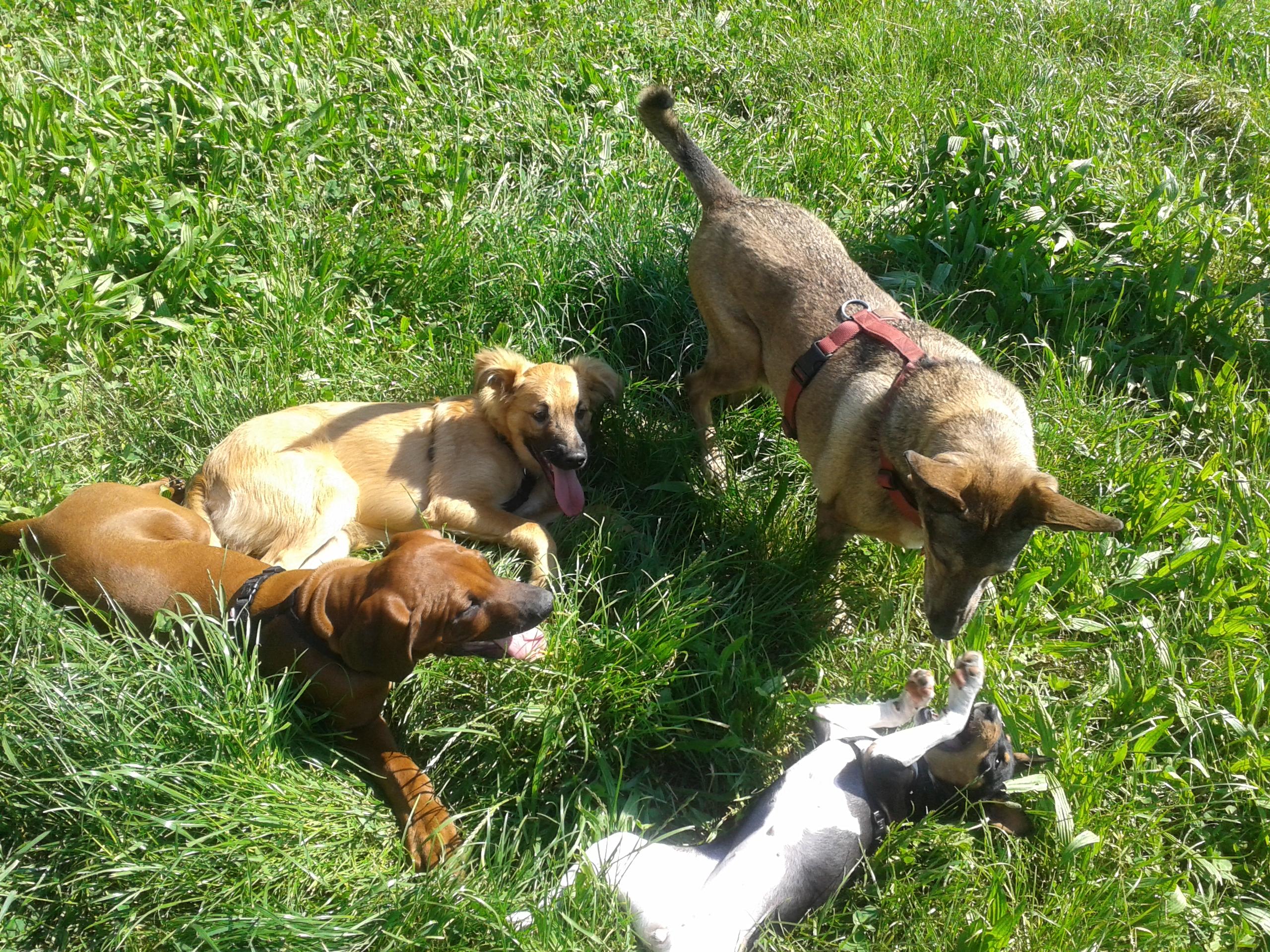 puppy-class-monza-milano