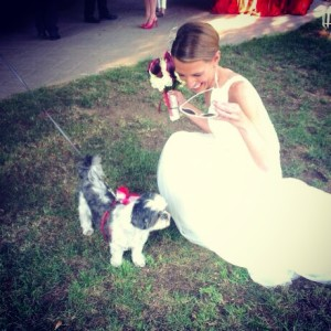 wedding-dog-sitter