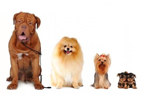 Morfologia del cane