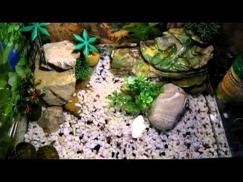 Tartarughe d 39 acqua dolce for Tartarughe appena nate
