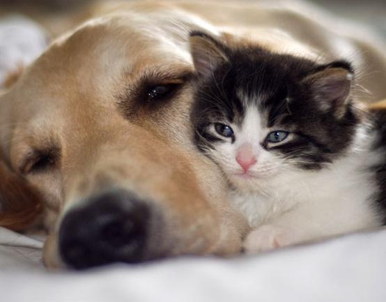 parassiti-cane-gatto