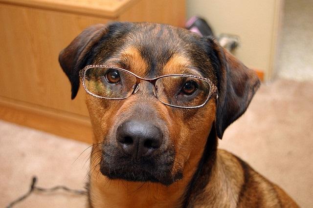 Morfologia-del-cane
