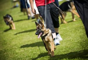 addestrare-un-cucciolo