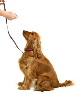 educare-un-cane
