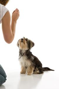 insegnare-seduto-al-cane